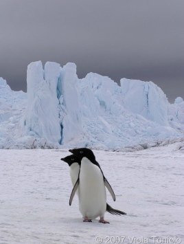 stages en Antarctique