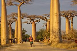 Stages à Madagascar