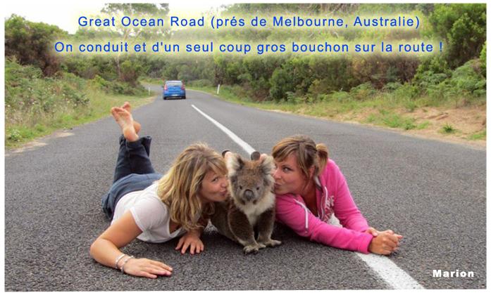 Marion et le koala