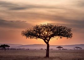 stages en Tanzanie tanzania internships